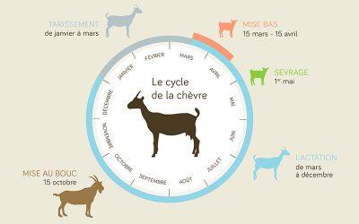 Connaissez-vous le cycle de la chèvre ?